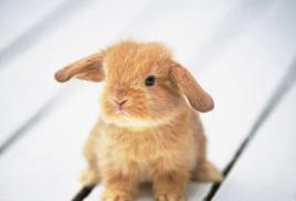 Стишок про зайчика.
